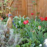 Lavendel, rote Tulpen, Traubenhyazinten, Walderdbeeren und Minze teilen sich den Platz mit der Holzente