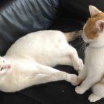 Katzen - trautes Beisammensein