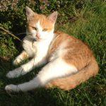 Katze im Sonnenschein