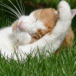 Katze putzt sich im Sonnenschein