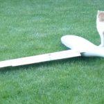 Katze mit Modellsegler