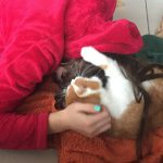 Katze - Schmuseeinheit