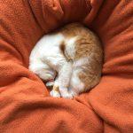Katze - ungewöhnliche Schlafposition