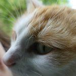 Katze - Großaufnahme