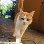 Katze erobert den Garten