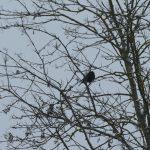 Winiger Vogel im winterlichen Baum