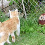 Die Katze bei Ulula im Kräuterbeet