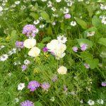 Sommergarten - Bienenparadies