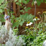 Echinacea, Lavendel, Minze und Holunder dürfen sich ungehindert ausbreiten. Marlies die Holzende steht dazwischen