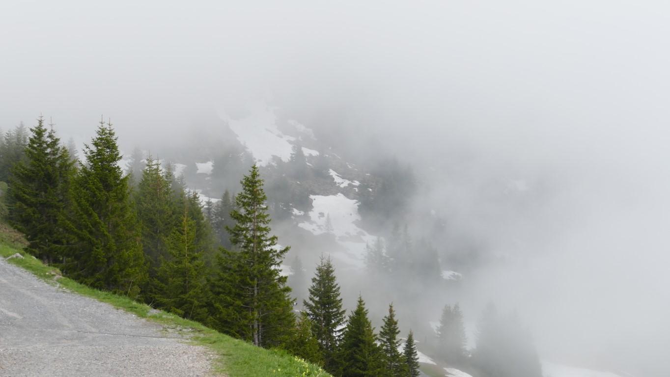 mal wieder Nebel