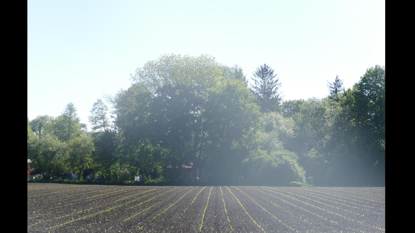 Maisfeld bei Karlsfeld