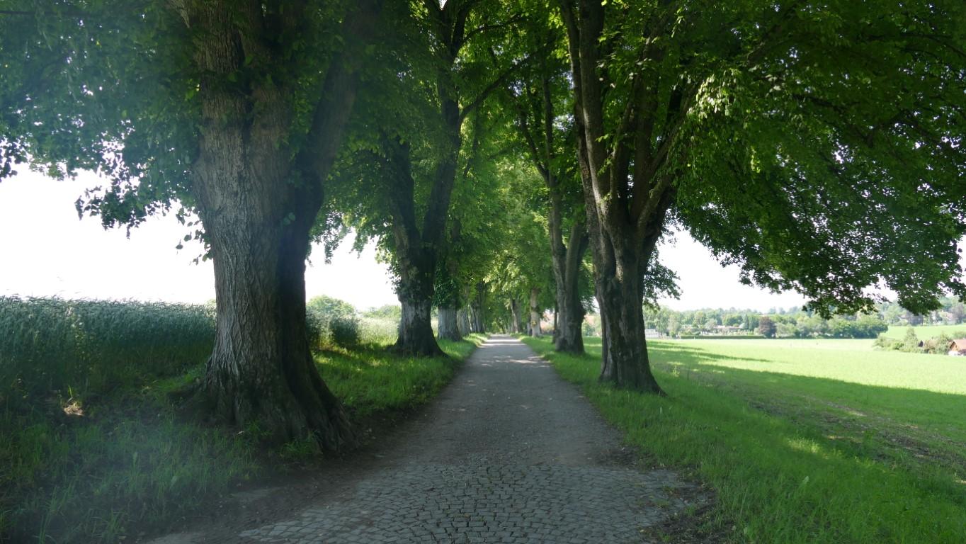 Lindenallee bei Aufkirchen