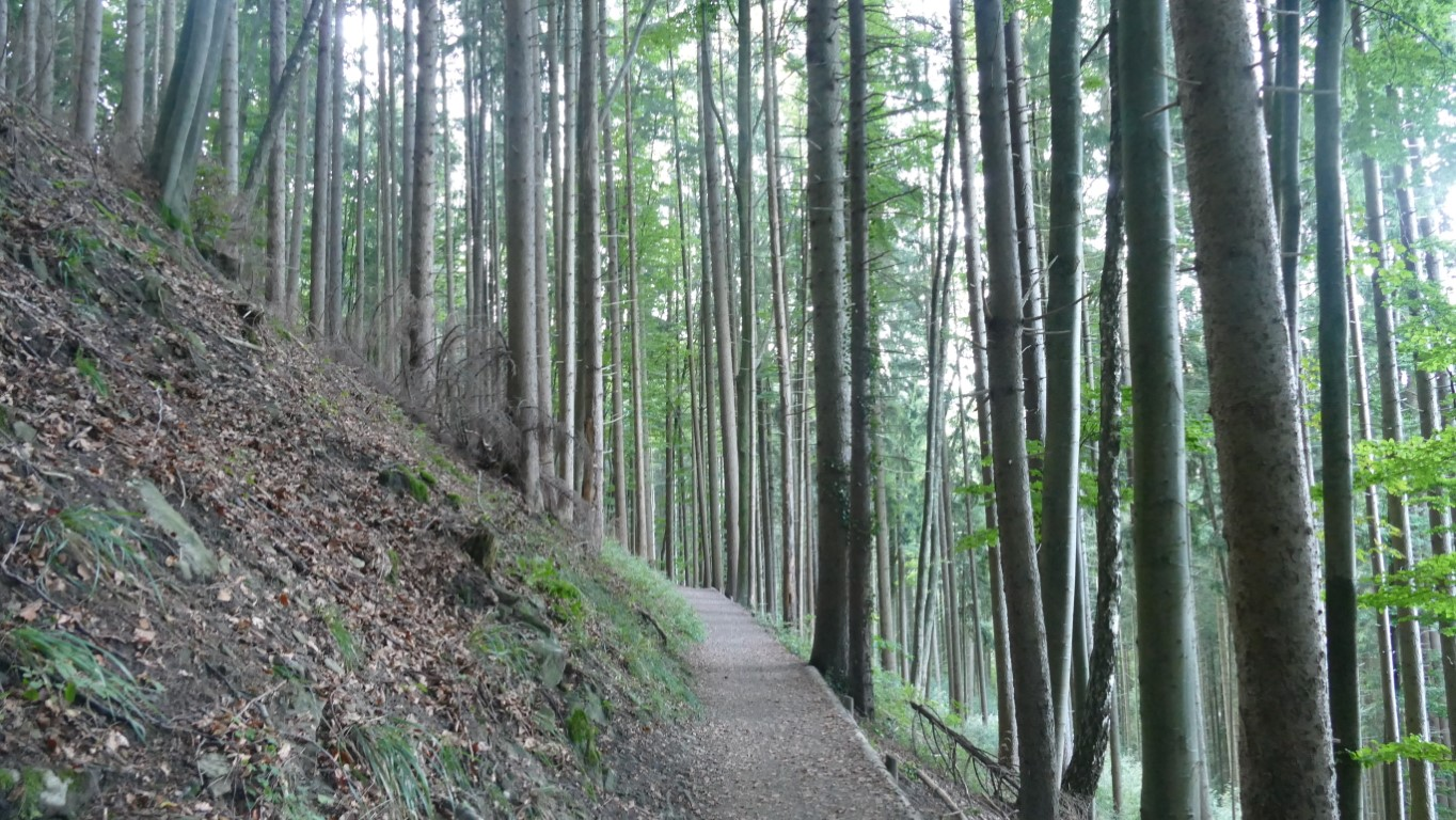 Wanderweg oberhalb des Tegrnsees