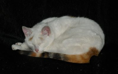 Katze schläft entspannt