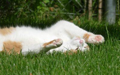 Katze räkelt sich im Sonnenschein